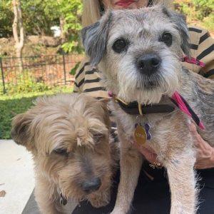 NatrixOne Senior Dog Testimonial