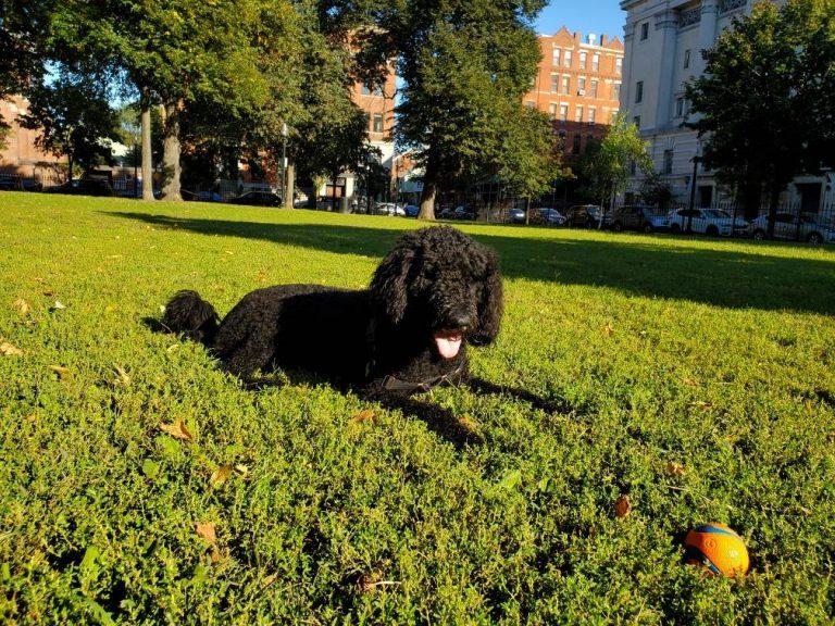 NatrixOne Healthy Dog