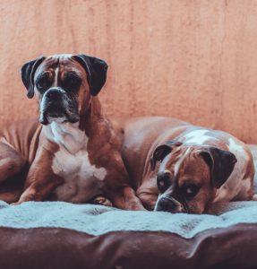 NatrixOne Senior Dog Supplement