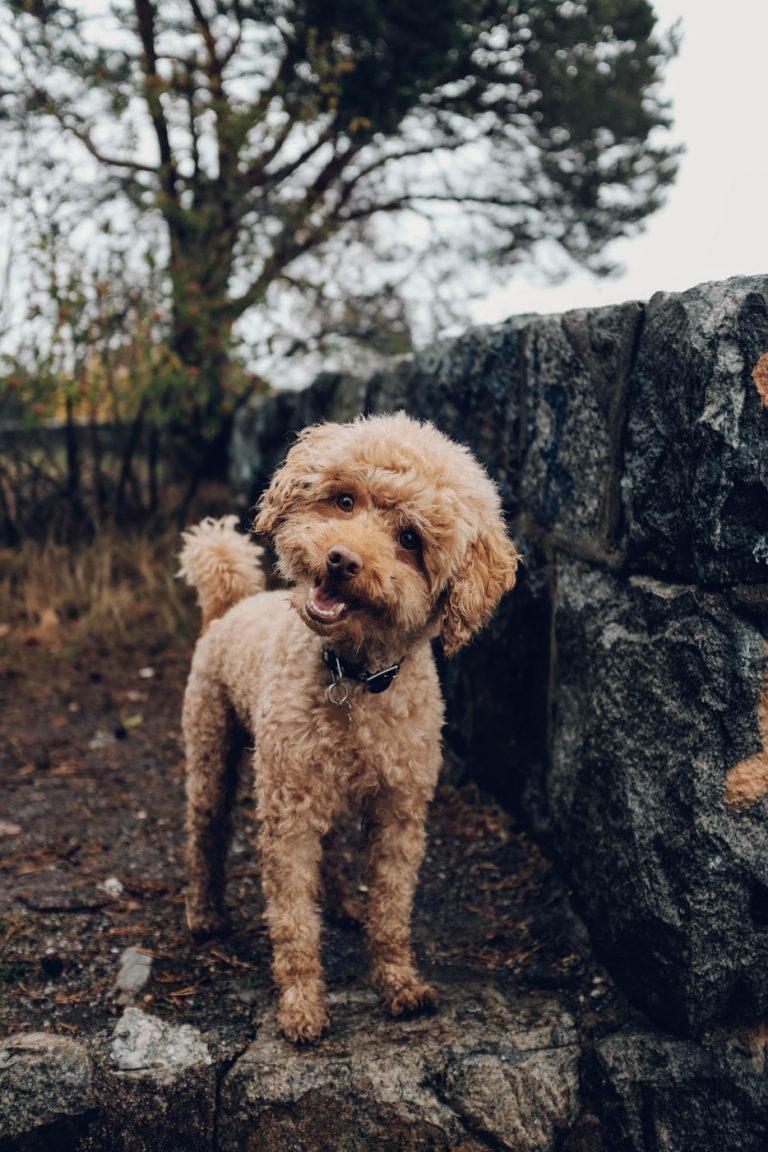 NatrixOne Happy Dog