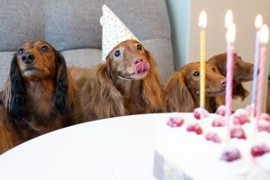 NatrixOne Birthday Dogs