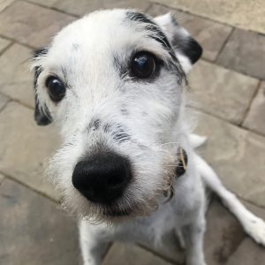 NatrixOne Dog Testimonial