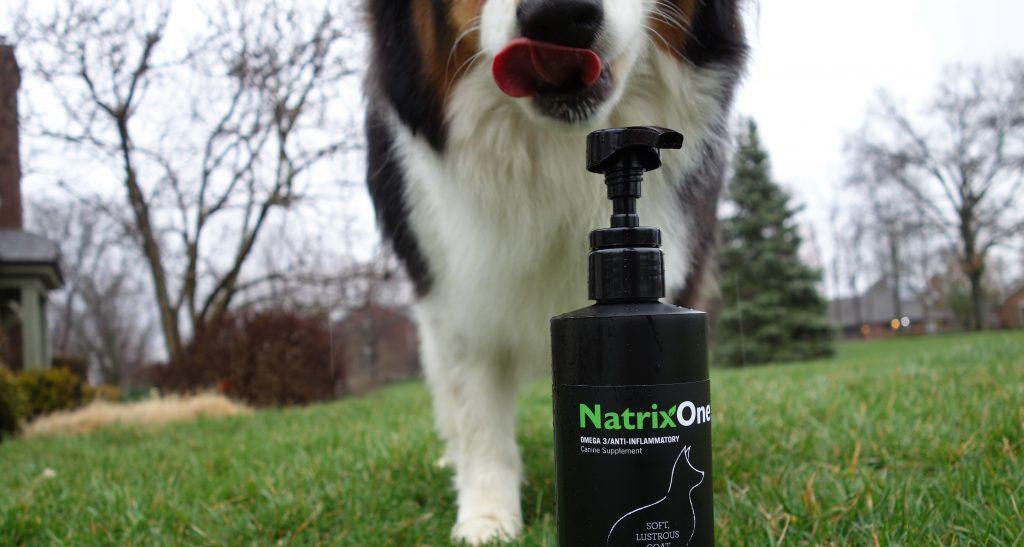 Dog Licking NatrixOne